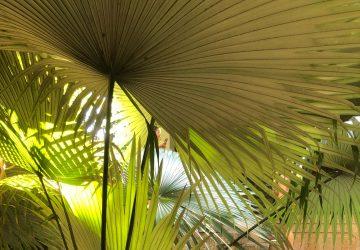 Particolare di una pianta nel Sitio RBM